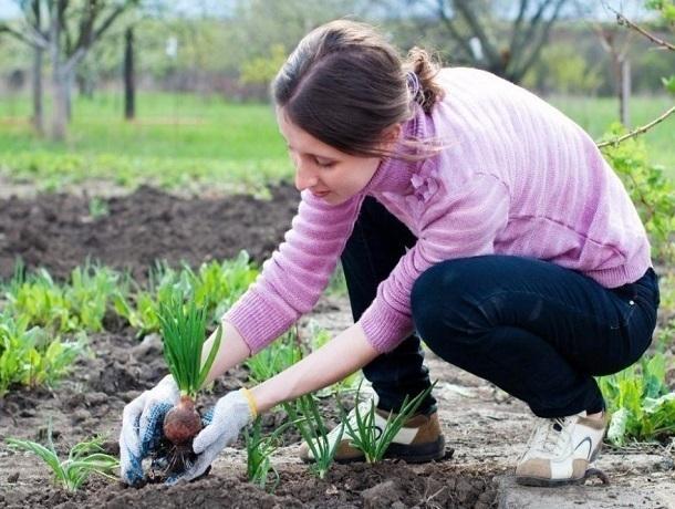 Почти 400 миллионов рублей пойдет на закладку садов в Ставропольском крае