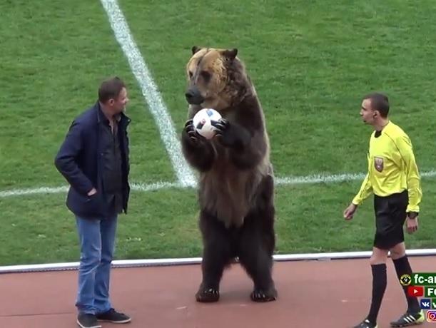 Иностранцы пришли в ярость от того, что матч пятигорской команды открывал медведь