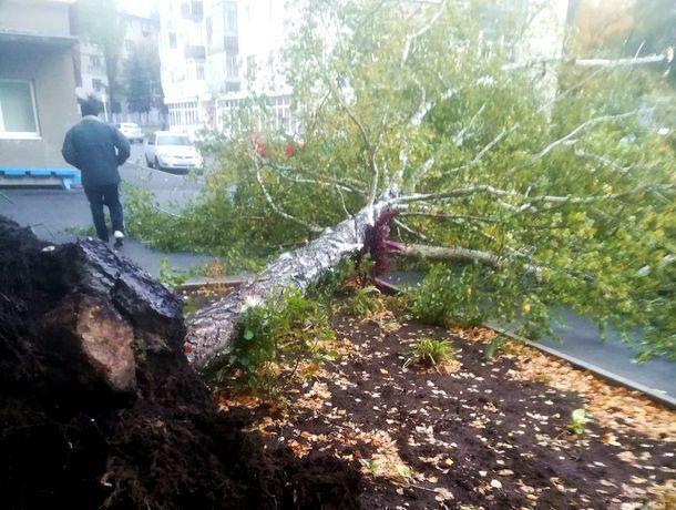 Сильный ветер повалил большое дерево во дворе многоэтажки в Ставрополе