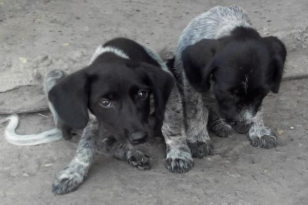 Неизвестный засунул трех щенков в мешок и оставил медленно умирать под палящим солнцем в Невинномысске