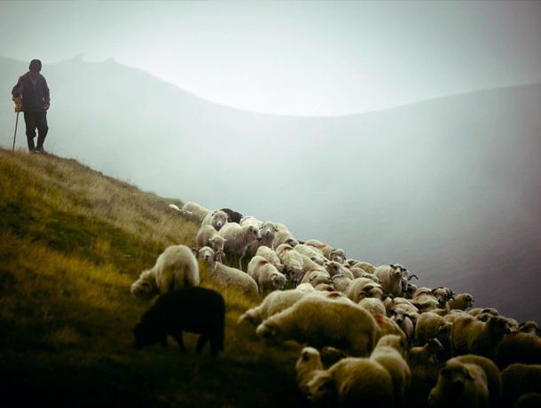 Трое молодых людей украли деньги у пастуха овец на Ставрополье