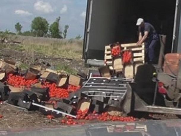 900 килограммов турецких томатов уничтожили в Пятигорске