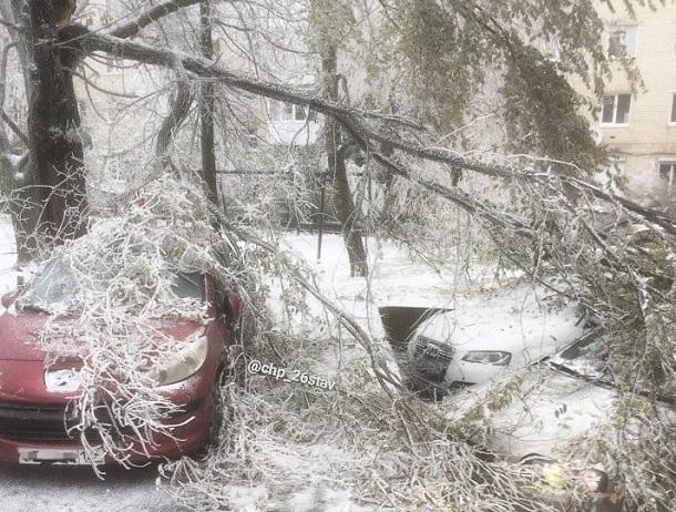 Оледеневшие ветки рухнули на припаркованные авто в Ставрополе
