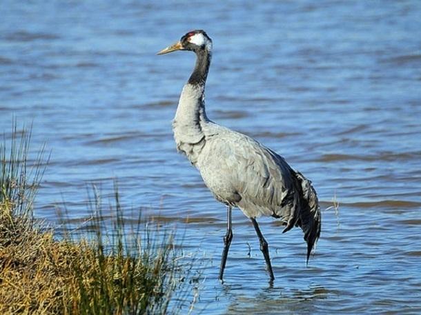 Более двухсот журавлей погибли на берегу Соленого озера из-за отравления